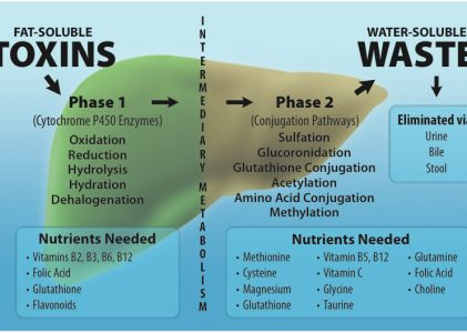 Glucuronidation-The critical liver detox pathway