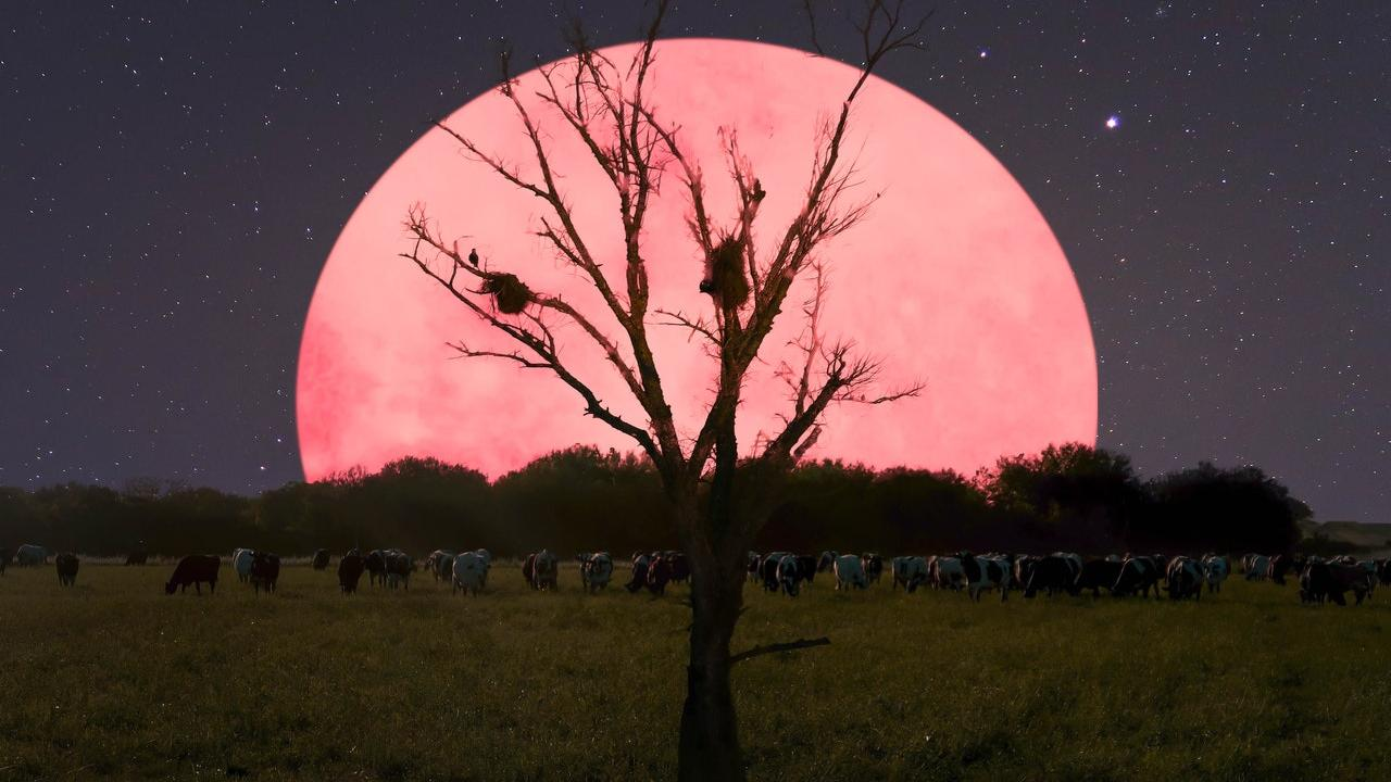 What do full moons and parasites have in common?