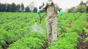 The impact of Environmental Toxicity on Human Health